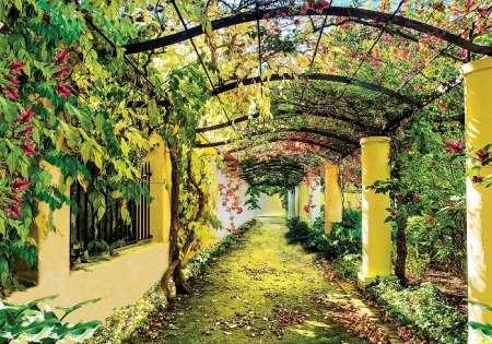 Pergola Garden - C0232