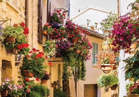 Flower Street - C0294