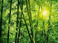 Фототапети с Бамбук
