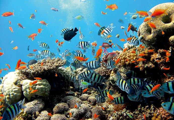 fototapetul pește și corali