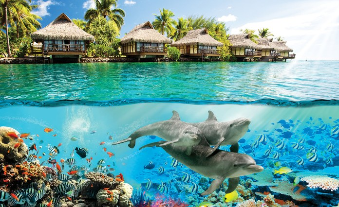 fototapetul mare cu delfinii