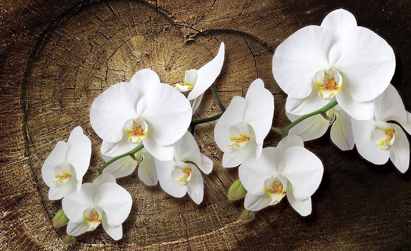 фототапет бяла орхидея на дърво